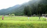 コスモス畑・草刈り(1)